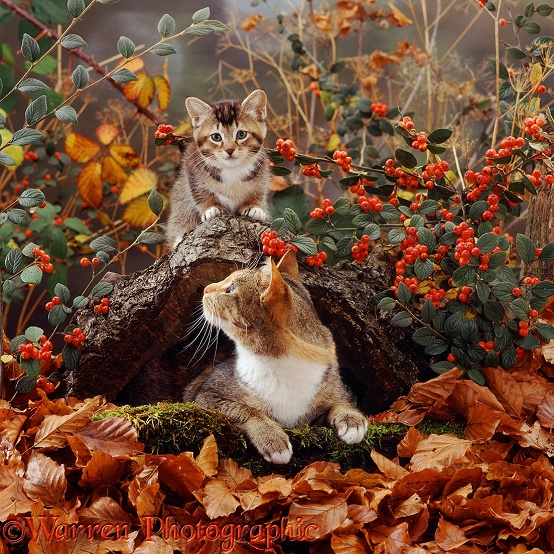 Cat And Kitten In Autumn Scene Photo WP12528