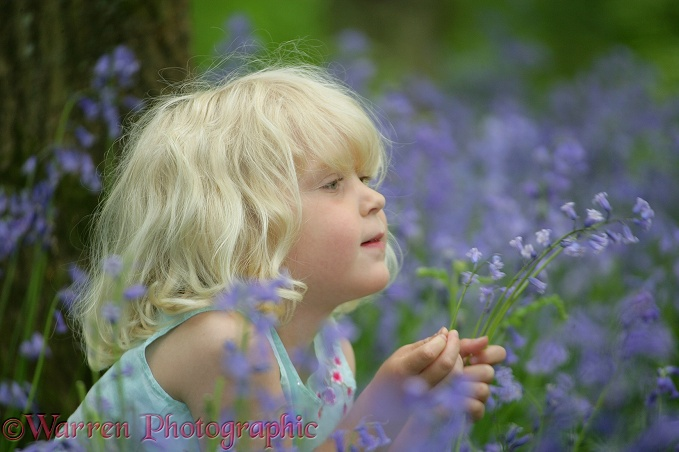 Siena (4) in Bluebell wood, holding flowers.  Surrey, England