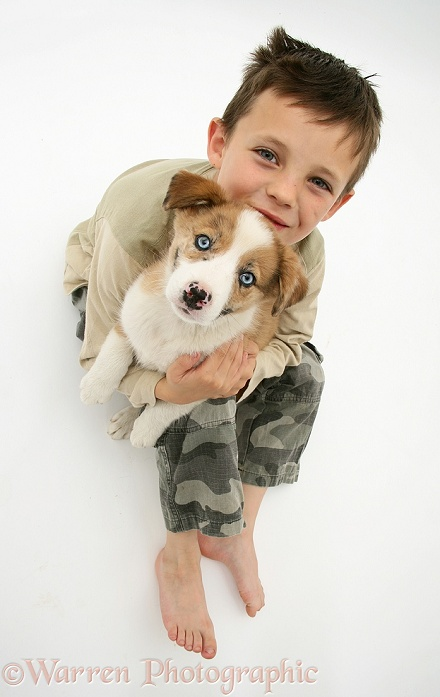 Luke (9) with his red merle Border Collie pup