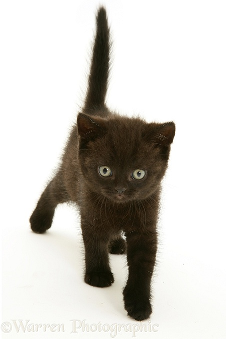 Black Cats Jpg