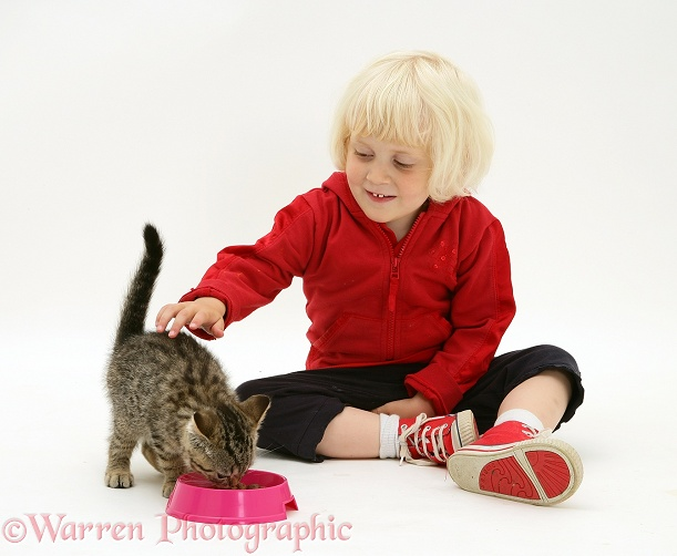 Siena feeding a tabby kitten, white background