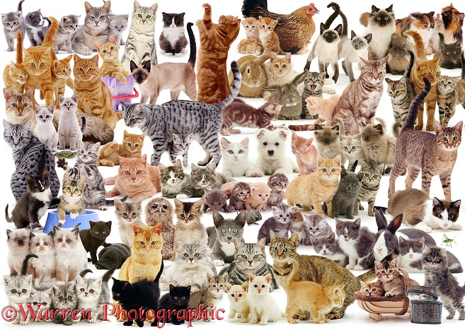 Cat Montage jigsaw, white background