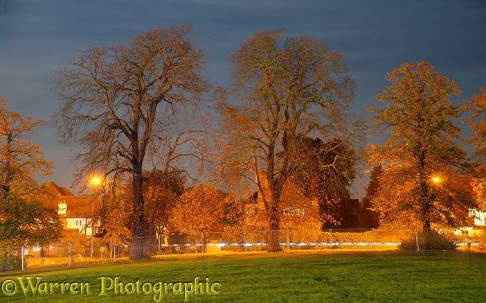 Trees lit by neon lights.  Surrey, England