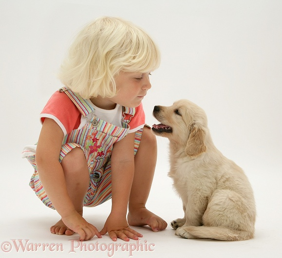 Siena with Golden Retriever pup sitting, white background