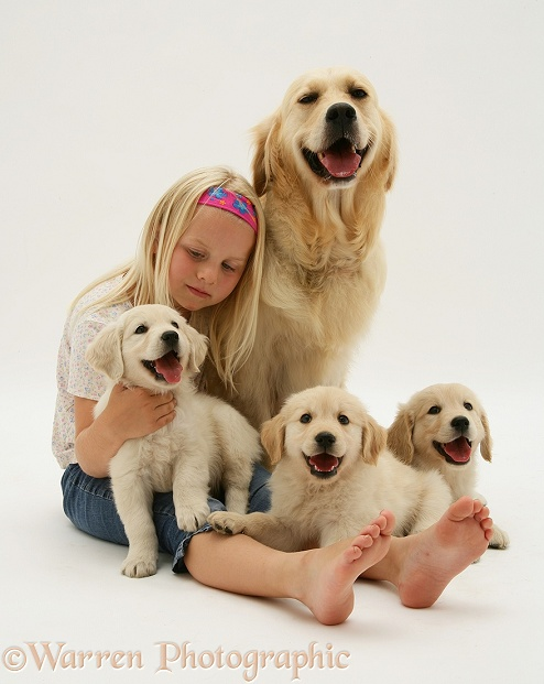 Child with Golden Retriever bitch and three pups, white background