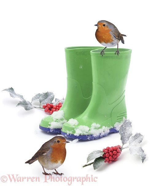 Robins and green wellies, white background