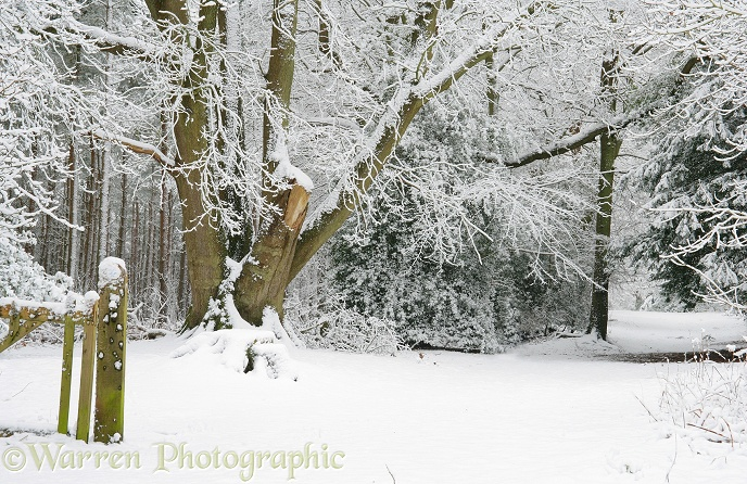 Deciduous woodland with snow