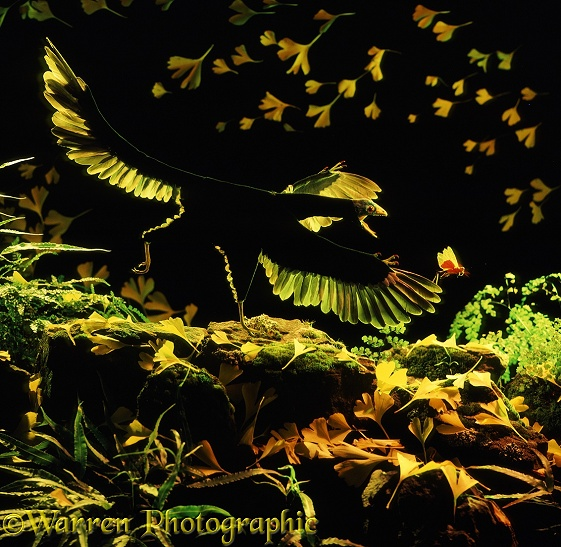 Archaeopteryx lithographica chasing a locust among wind-blown autumn leaves