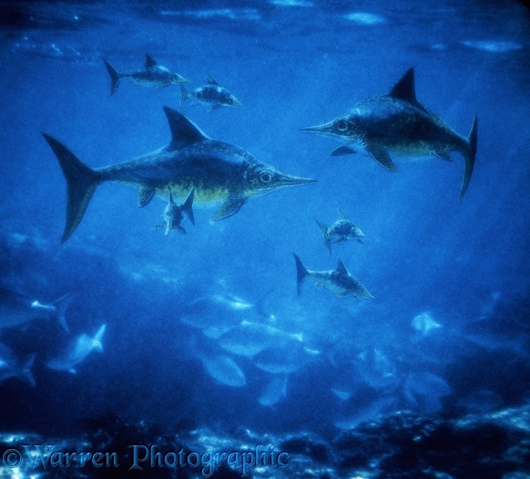 Family group of Ichthyosaurs (Ophthalmosaurus) (length 3m, 10ft).  Upper Jurassic England