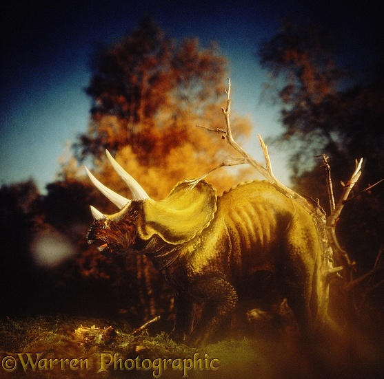 Triceratops bellowing on an autumn morning (length 11m, 35ft).  Cretaceous North America