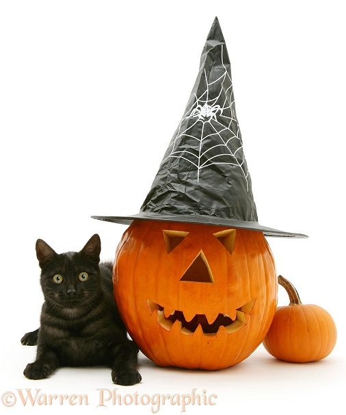Black smoke cat with a large Halloween Pumpkin in a witch's hat, white background