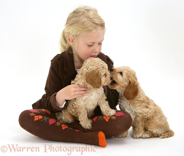 Siena (5) with Cockapoo puppies, white background
