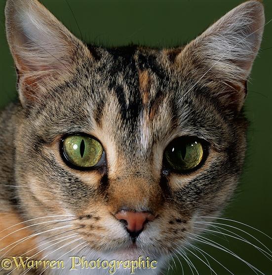 Cat S Pupils