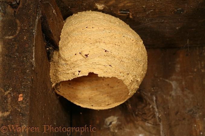 Hornet nest in bird box photo WP16049