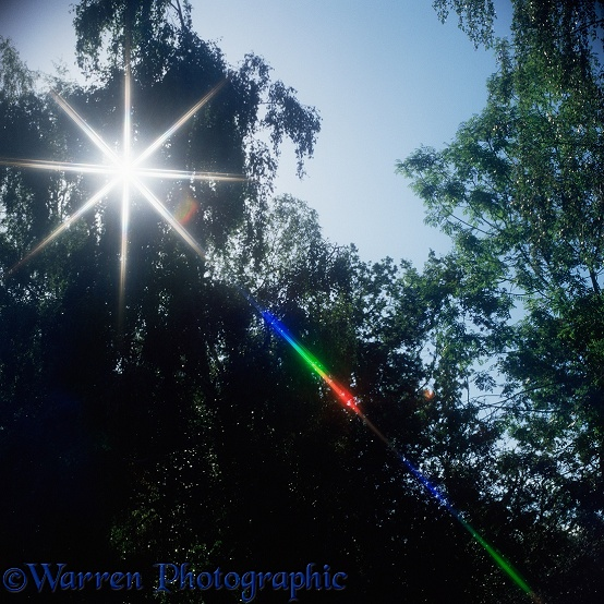 Sunlight shining through trees, split into red, green and blue by a filter on the lens