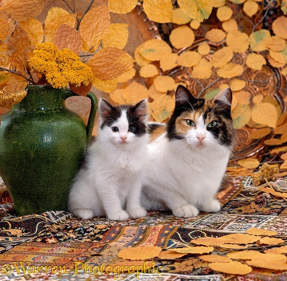 Tortoiseshell-and-white mother cat with her Black-and-white kitten with vase and autumnal leaves