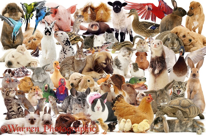 Pets montage jigsaw, white background