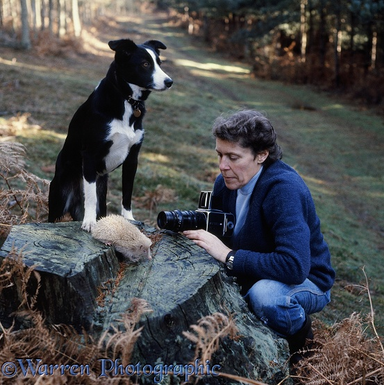Jane Burton photographing albino hedgehog with Border Collie, Tess