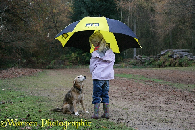Siena (5) with umbrella and Lakeland Terrier x Border Collie bitch, Bess