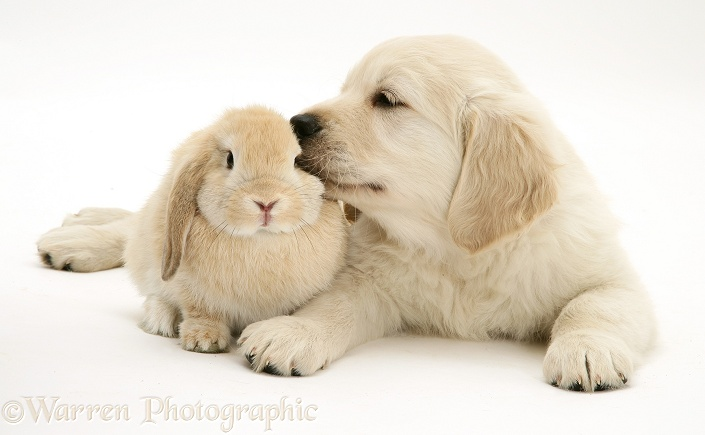 Rabbit Ears For Dogs