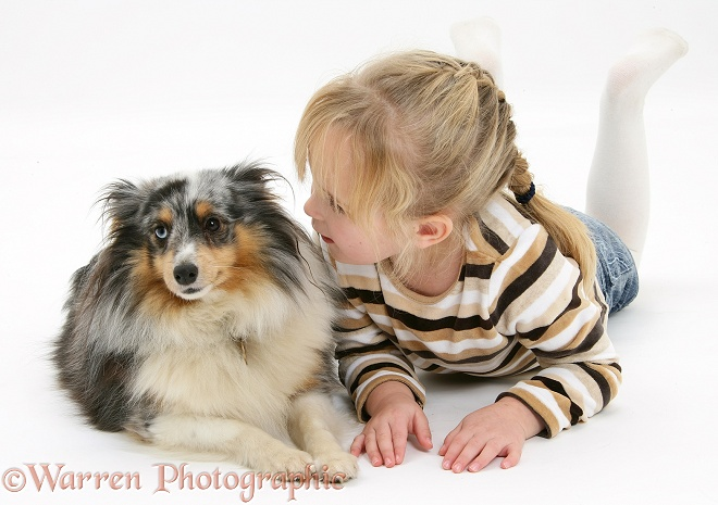 Kacey (5) with Shetland Sheepdog bitch, Sapphire, white background