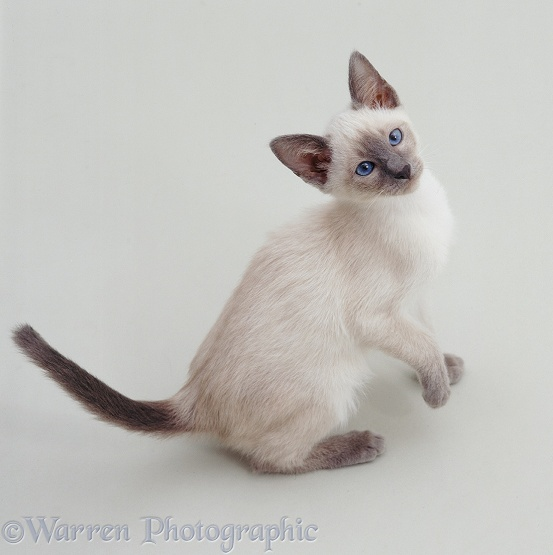 Images Cats Kittens