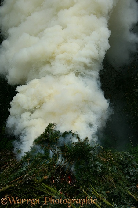 Smoke from a brushwood fire