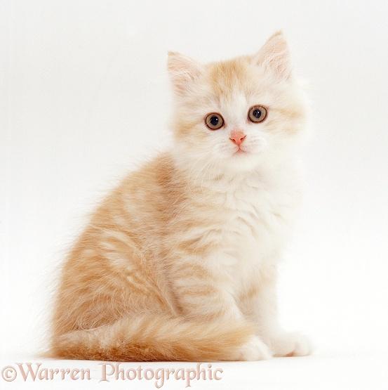 opalseal's cats 19779
