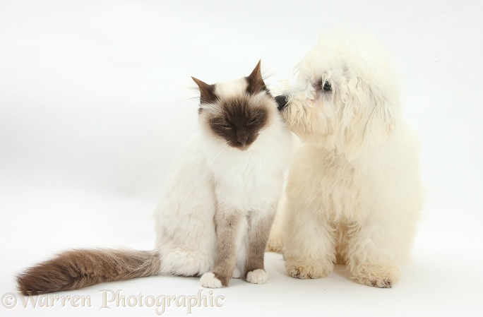 New Dog With An Old Cat