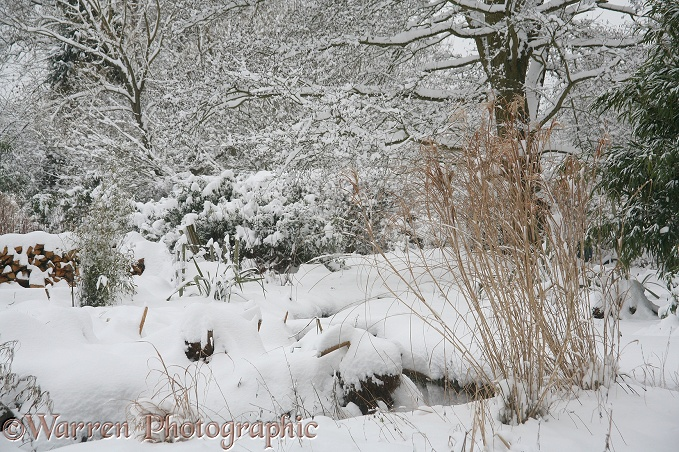 English country garden buried in midwinter snow