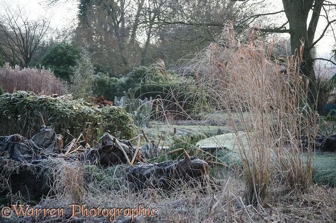 English country garden in midwinter