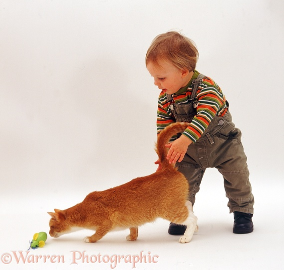 Toddler with ginger cat, white background