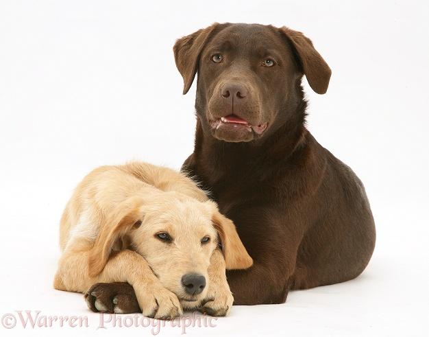 Если вязали собаку за щенка