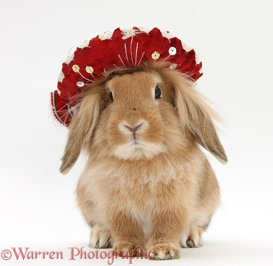 Rabbit wearing a Mexican hat, white background