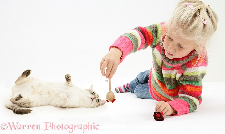 Girl with Bengal x Birman cat