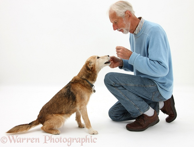 Kim giving Lakeland Terrier x Border Collie bitch, Bess, a treat, white background