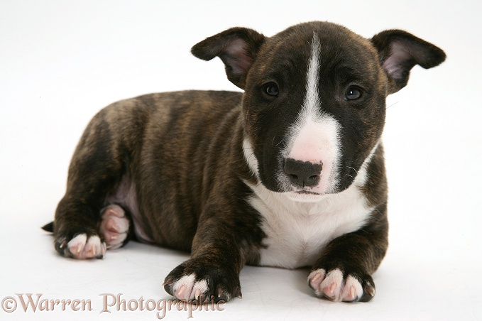 Baby Dogs For Sale Uk