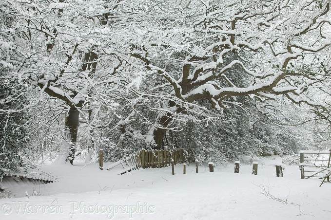Albury Heath snow scene.  Surrey, England