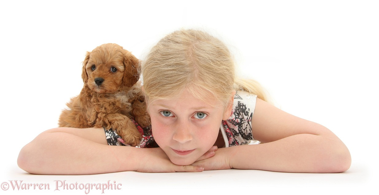 Siena with Cockapoo pup, 7 weeks old, white background