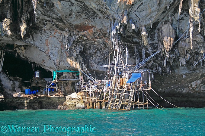 Bamboo scaffolding used by local people to collect nests the nests of swiftlets to make birds' nest soup.  Koh Phi Phi, Thailand