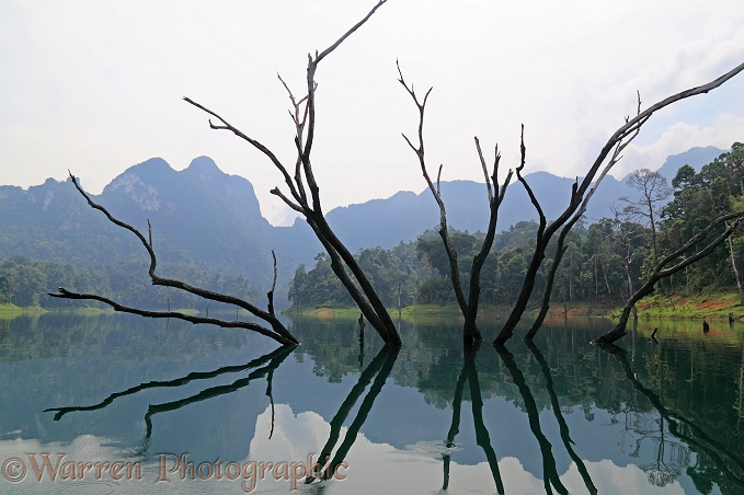 Submerged tree in man-made lake.  Khao Sok, Thailand