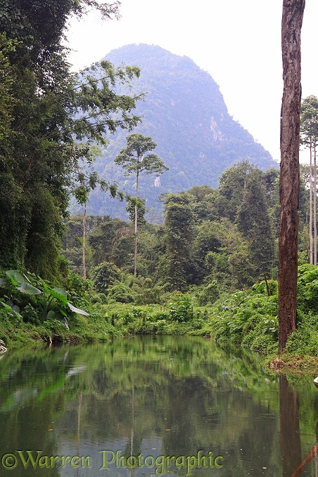 River in tropical forest.  Khao Sok, Thailand