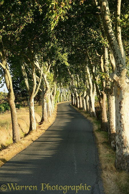 Driving through an avenue of trees.  France