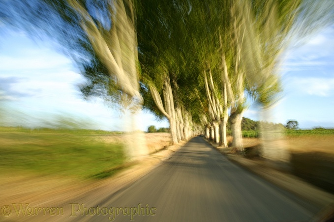 Driving through an avenue of trees at speed.  France