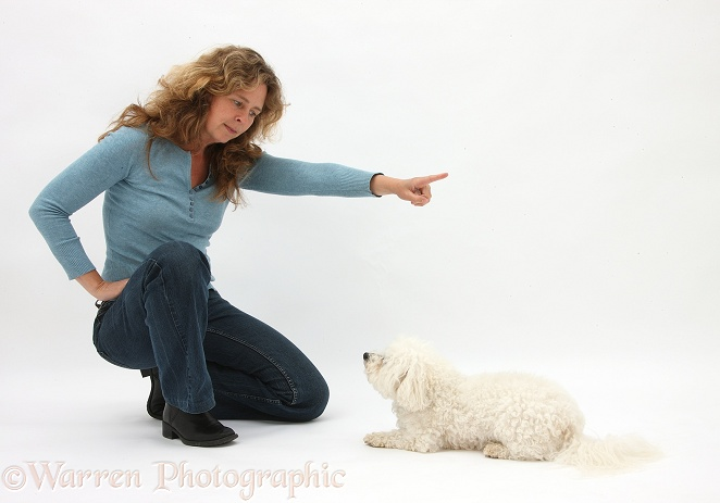 Woman commanding Bichon Frise