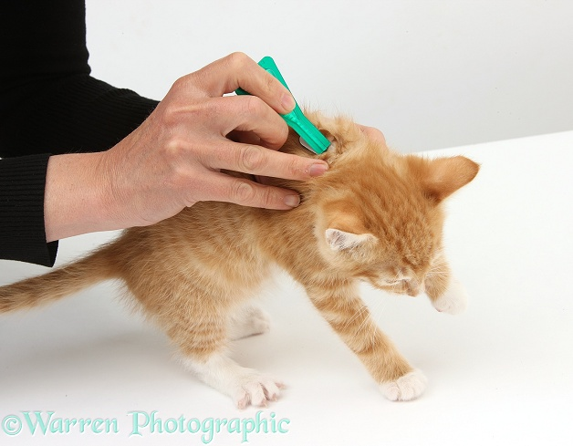 cat wound care at home