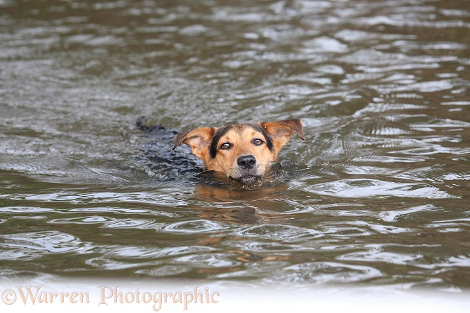 Dog swimming after boat along in a river.  Tortuguero, Costa Rica