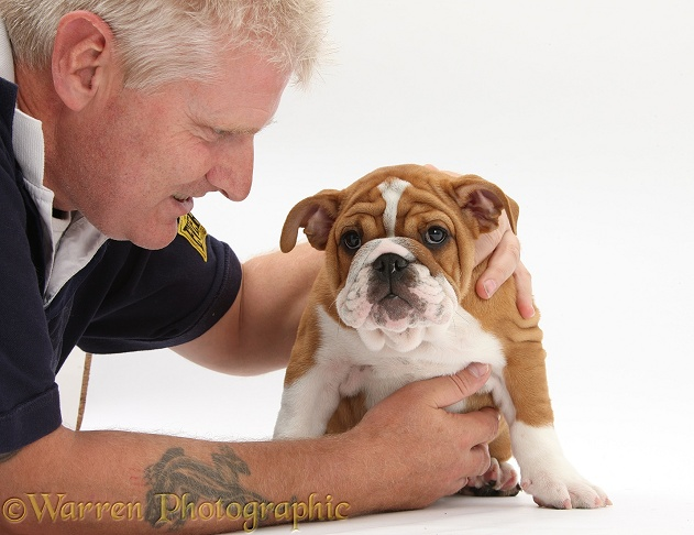 Man with Bulldog pup