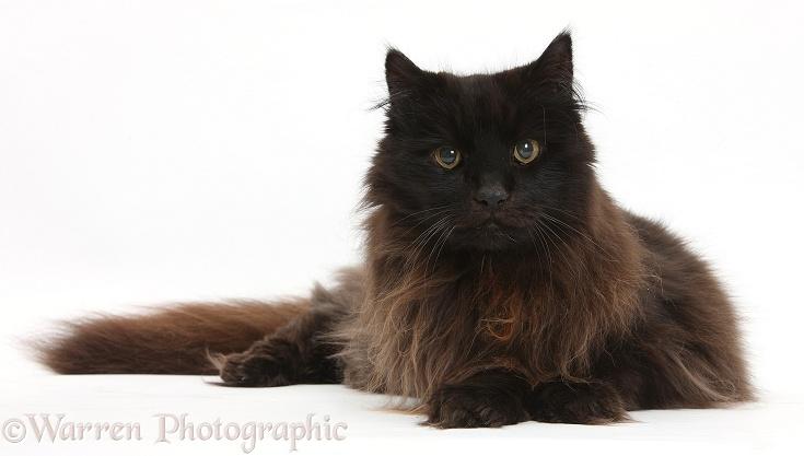 Scruffy Black Cat