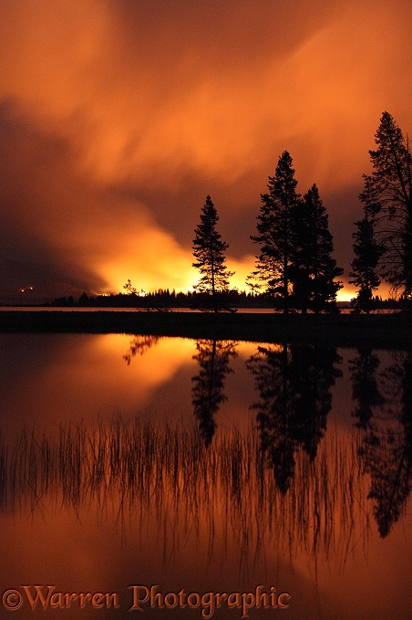 Forest fire at night with silhouette trees.  Yellowstone, USA